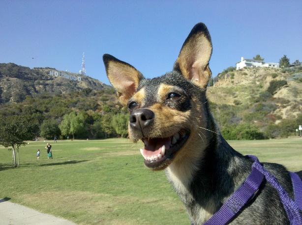Lake Hollywood Hills Dog Park